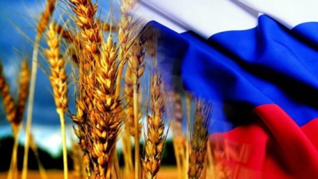 Рис. 6. Пшеница на фоне флага России