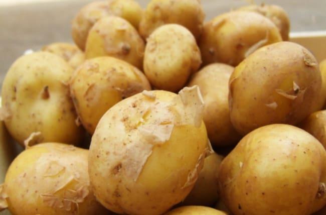 Рис. 3. Картофель La Bonnotte