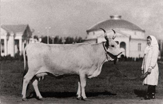 Рисунок 4. На ВДНХ в 1954 году