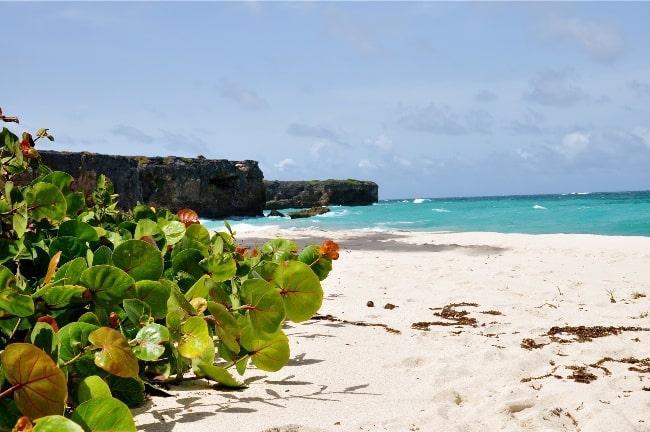 Рисунок 13. Пляж Барбадоса