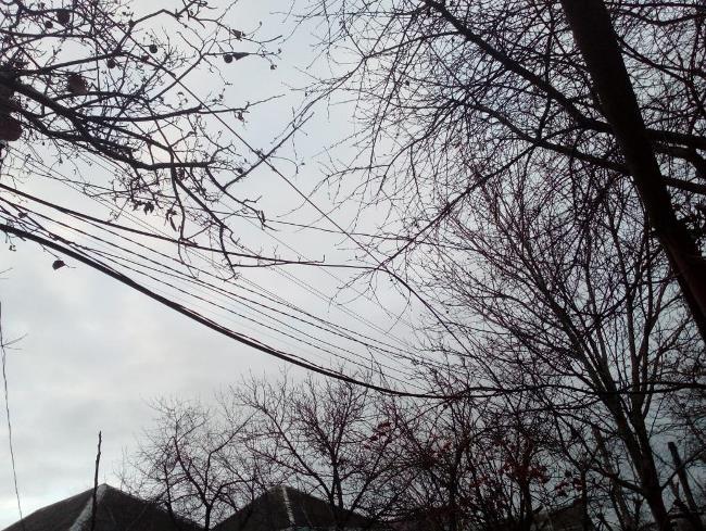 Рис. 2. Ветки деревьев в телефонных проводах