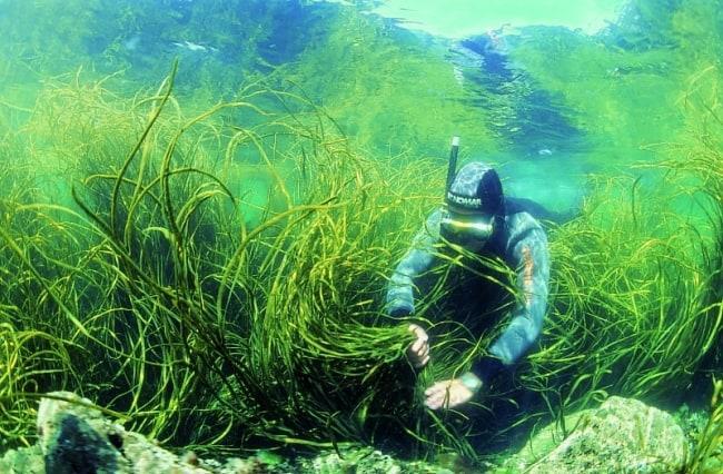 Рис. 6. Дергаль работает в буквальном смысле под водой