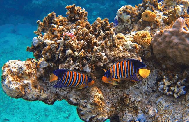 Рис. 6. Коралловые рифы Красного моря в Египте