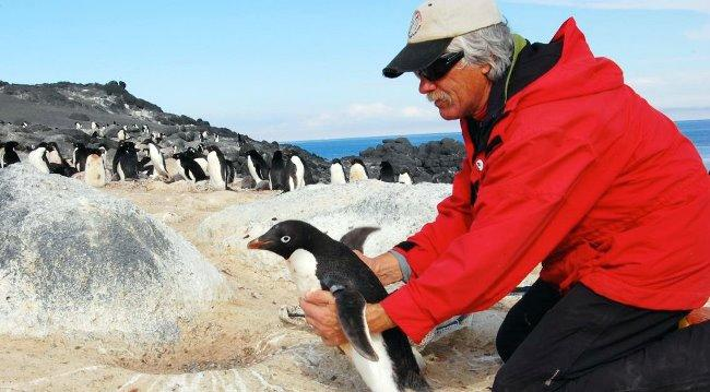 Рис. 8. А вот ещё одна интересная профессия – переворачиватель пингвинов. Кстати, тоже помогает сохранить популяцию редких птиц.