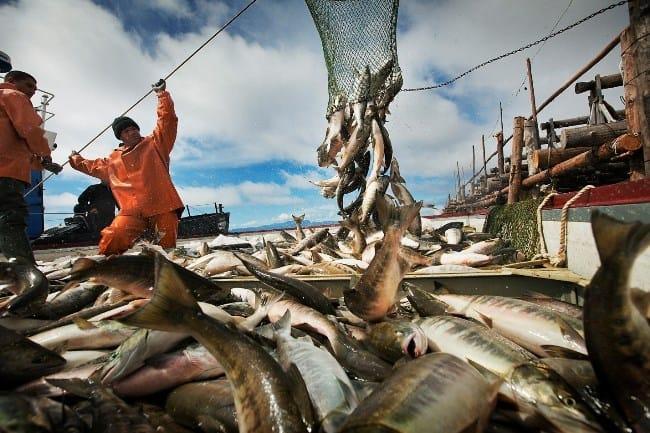 Рис. 1. Рыбный промысел на Камчатке