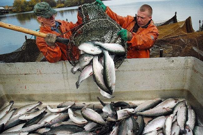 Рис. 2. Рыбный промысел в Карелии