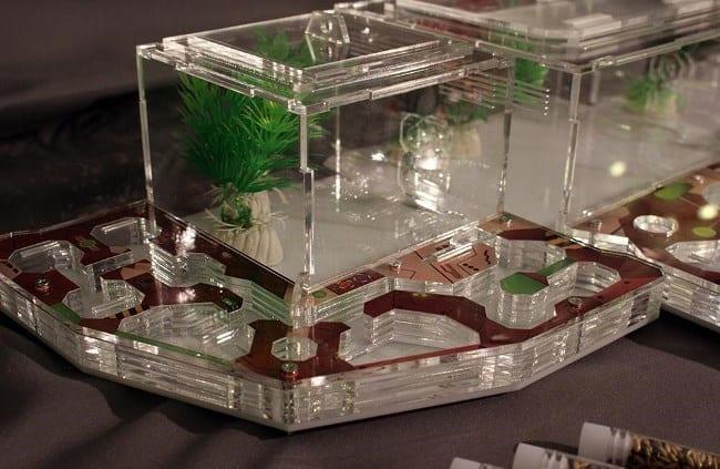 Рис. 3. Формикарий – современное развлечение по разведению муравьев