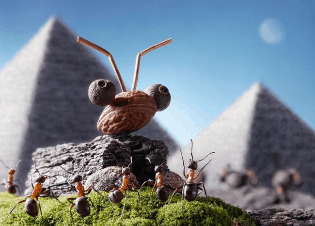 Рис. 4. Несмотря на все признаки финансовой пирамиды, желающих выращивать насекомых становилось больше