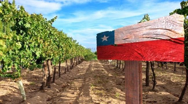 Рисунок 1. Чилийский виноградник