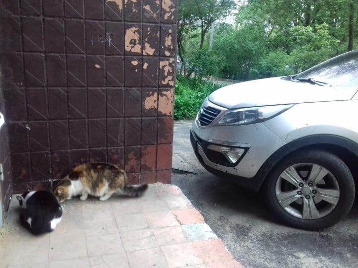 Рис. 2. Летом животные питаются на улице