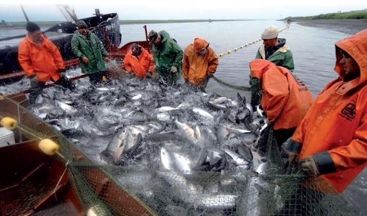 Рис. 3. Рыбный промысел на Камчатке