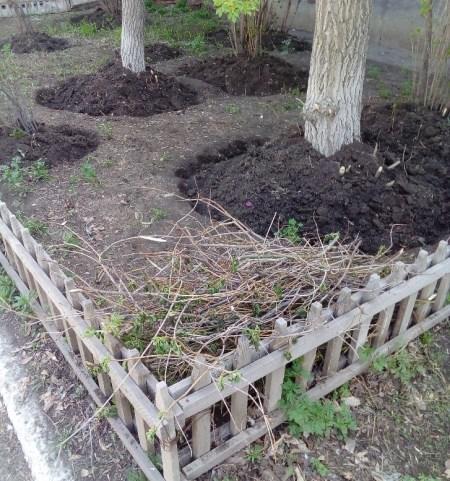 Фото: мой ухоженный газон с ветками, ихникто не будет вывозить. Источник: архив автора вопроса