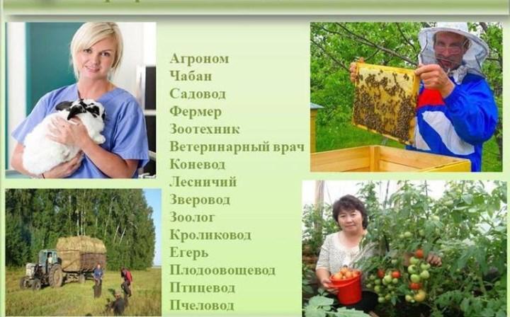 Рис. 2. Сельские профессии