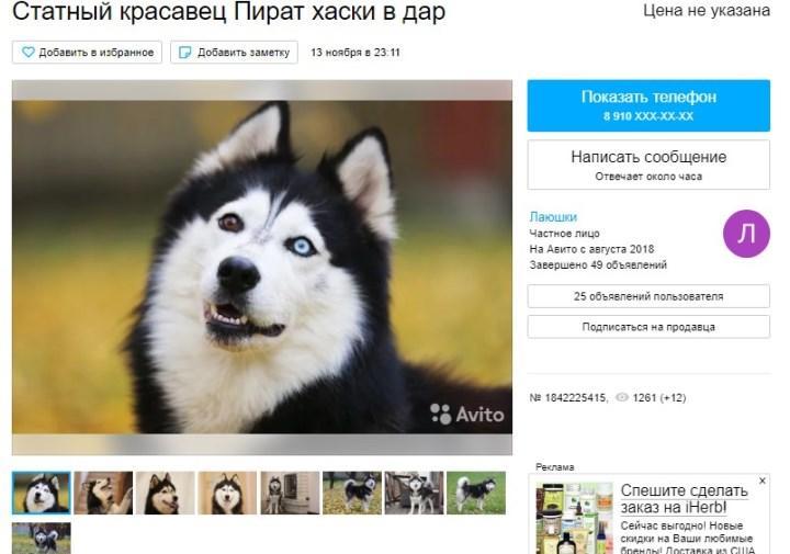 Скрин с Avito.ru