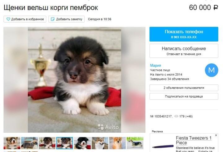 Скриншот объявления на «Авито»
