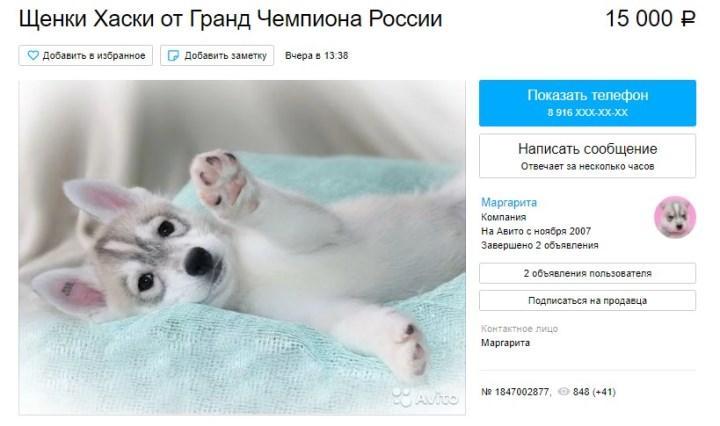 Скриншот объявления на Avito.ru