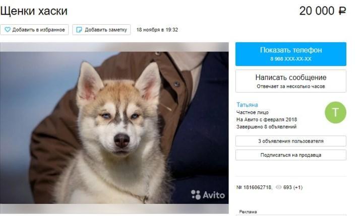 Скриншот с Avito.ru