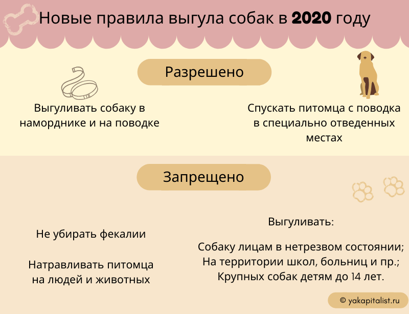 Новые правила выгула собак в 2020 году