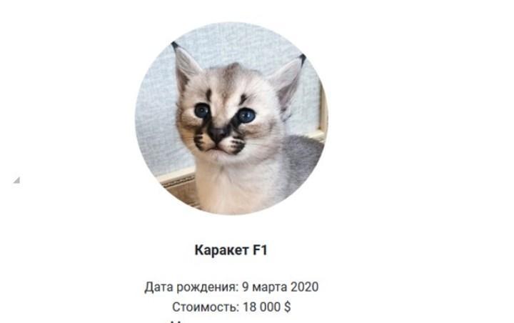 Скрин объявления с exoti.ru – сайт питомника L'UNICORNE