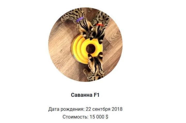 Скрин с exoti.ru