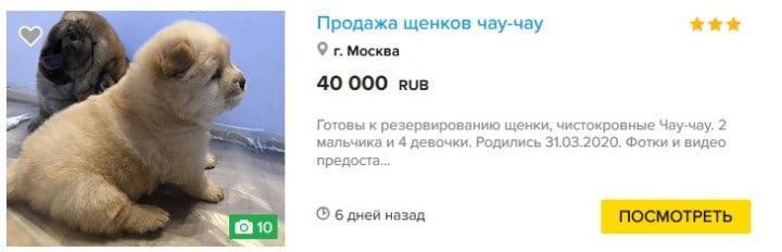 Скрин с kinpet.ru