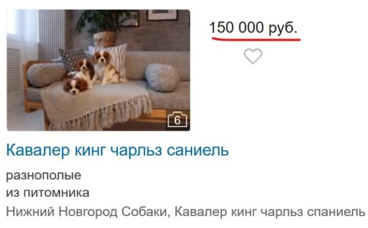 Скрин с сайта объвлений kinpet.ru