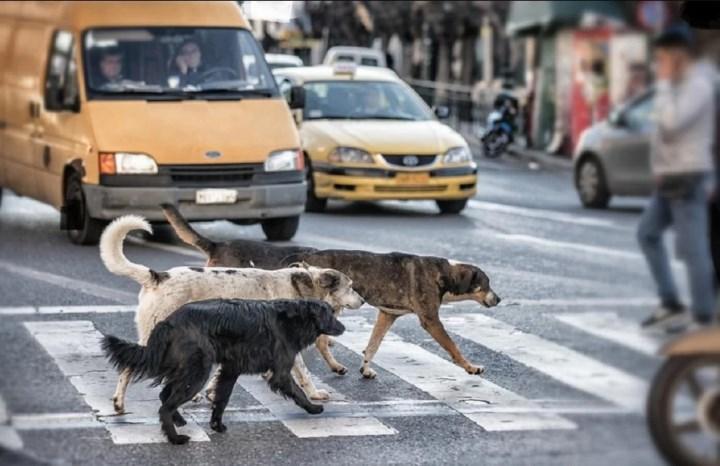 Под эти правила попадают и аварии с собаками