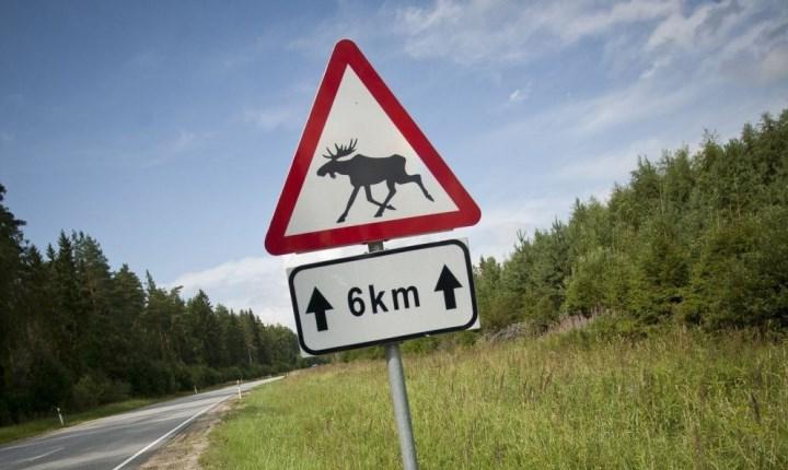 знак «Дикие животные» не обязывает останавливаться или снижать скорость